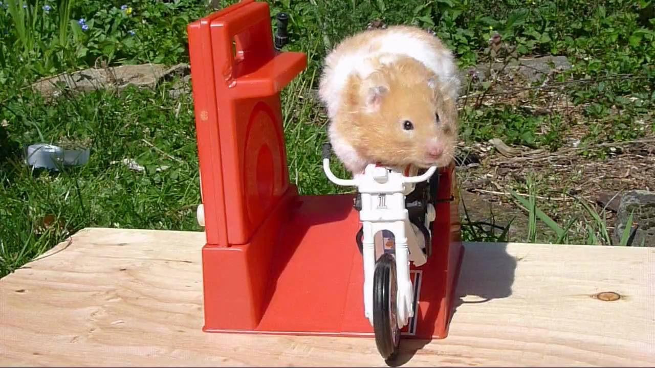 Hammy-the-Hamster-Rides-Again