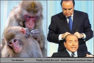 two-monkeys-totally-looks-like-silvio-berlusconi-bruno-vespa