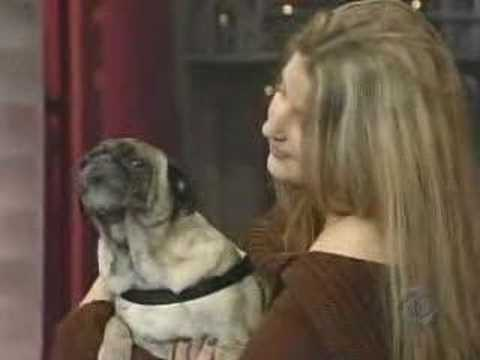 Odie-the-Pug-I-Love-You-Late-Show-with-David-Letterman