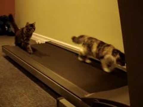 Treadmill-Kittens